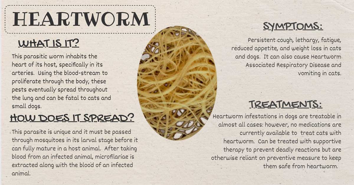 Symptoms of dogs in worm
